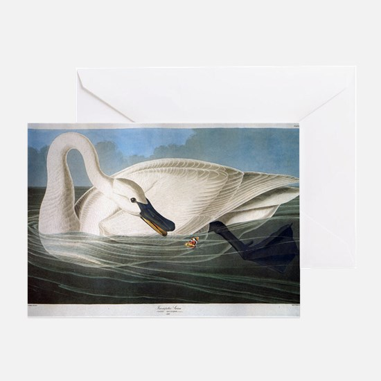 J J Audubon - Swan Greeting Card