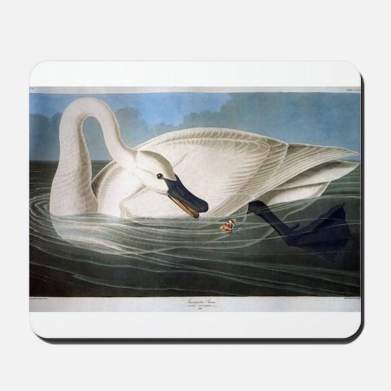 J J Audubon - Swan Mousepad
