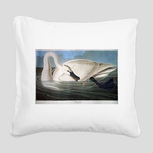 J J Audubon - Swan Square Canvas Pillow