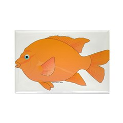 Garibaldi Damselfish fish Rectangle Magnet (10 pac