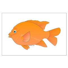 Garibaldi Damselfish fish Posters