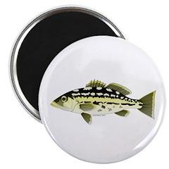 Calico Kelp Bass fish Magnet