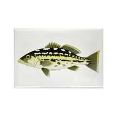 Calico Kelp Bass fish Rectangle Magnet (10 pack)