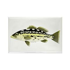 Calico Kelp Bass fish Rectangle Magnet
