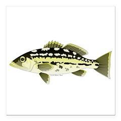 Calico Kelp Bass fish Square Car Magnet 3