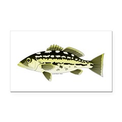 Calico Kelp Bass fish Rectangle Car Magnet