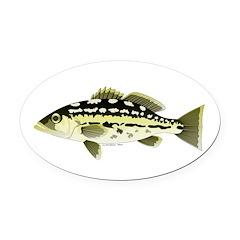 Calico Kelp Bass fish Oval Car Magnet