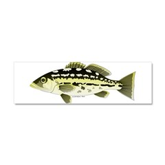 Calico Kelp Bass fish Car Magnet 10 x 3