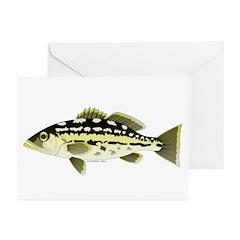 Calico Kelp Bass fish Greeting Cards (Pk of 10)