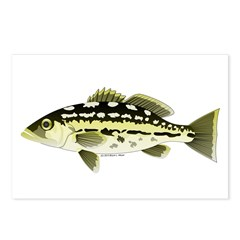 Calico Kelp Bass fish Postcards (Package of 8)