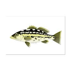Calico Kelp Bass fish Posters