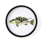 Calico Kelp Bass fish Wall Clock