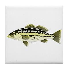 Calico Kelp Bass fish Tile Coaster