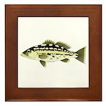Calico Kelp Bass fish Framed Tile