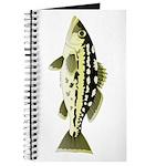 Calico Kelp Bass fish Journal