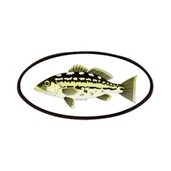 Calico Kelp Bass fish Patches