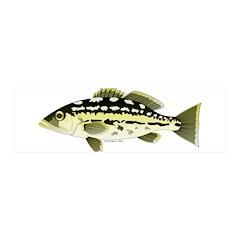 Calico Kelp Bass fish Wall Decal