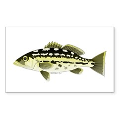 Calico Kelp Bass fish Decal