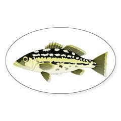 Calico Kelp Bass fish Decal