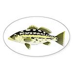 Calico Kelp Bass fish Sticker