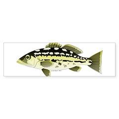 Calico Kelp Bass fish Bumper Bumper Sticker