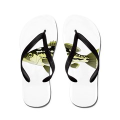 Calico Kelp Bass fish Flip Flops