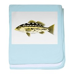 Calico Kelp Bass fish baby blanket