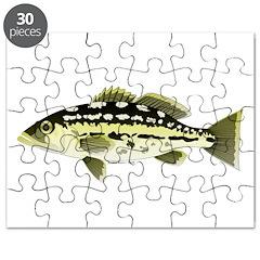 Calico Kelp Bass fish Puzzle