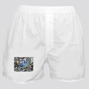 Beautiful BlueJay Boxer Shorts