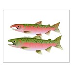 Pacific Coho Salmon fish couple Posters