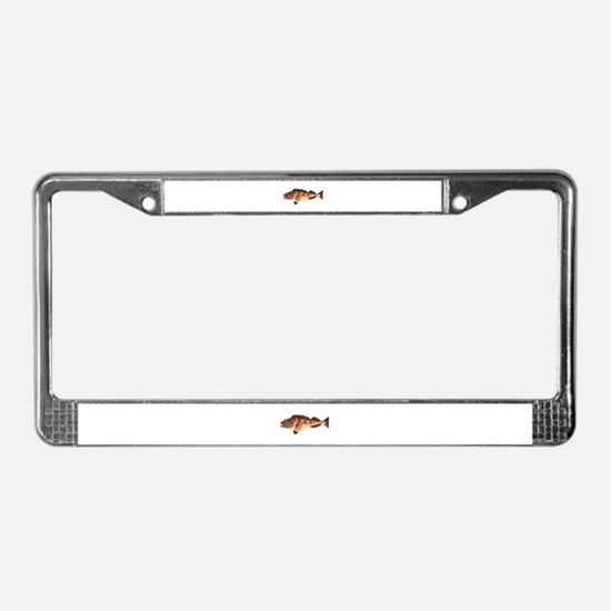 Lingcod fish License Plate Frame
