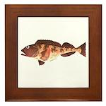 Lingcod fish Framed Tile