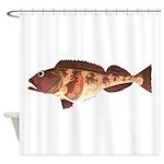 Lingcod fish Shower Curtain