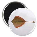 California Stingray Magnet
