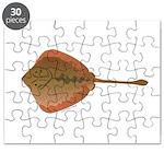 California Stingray Puzzle