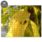 Bugs Do It Puzzle