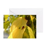 Bugs Do It Greeting Cards (Pk of 10)
