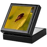 Bugs Do It Keepsake Box
