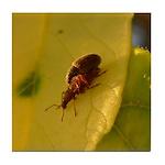Bugs Do It Tile Coaster