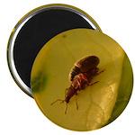 Bugs Do It Magnet