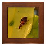 Bugs Do It Framed Tile