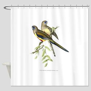 Antique 1875 John Gould Parakeets Bird Print Showe