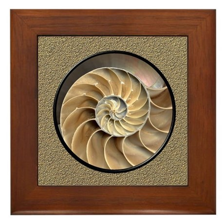 Nautilus Shell Framed Tile