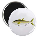 Greater Amberjack fish Magnet