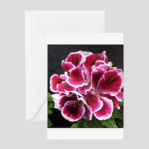 GERANIUM FLOWER~Regal Picotee~ Greeting Card