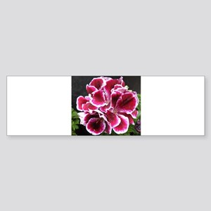 GERANIUM FLOWER~Regal Picotee~ Sticker (Bumper)