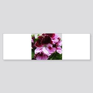GERANIUM FLOWER~Regal Plum~ Sticker (Bumper)