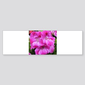 GERANIUM FLOWER~Regal Cerise~ Sticker (Bumper)