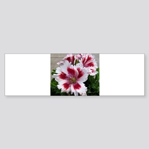 GERANIUM FLOWER~Regal Aztec~ Sticker (Bumper)