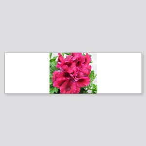 GERANIUM FLOWER~Regal Inez~ Sticker (Bumper)